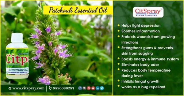patchouli essetinal oil